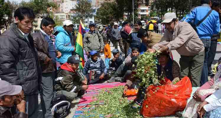 Adepcoca conspira con la oposición para afectar el Día del Acullico