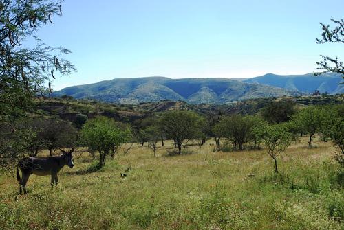 Desaparece un menor en Carachimayo cuando realizaba labores agrícolas