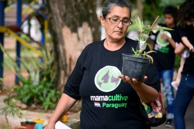 En Paraguay rige ley sobre cultivo y uso medicinal del cannabis