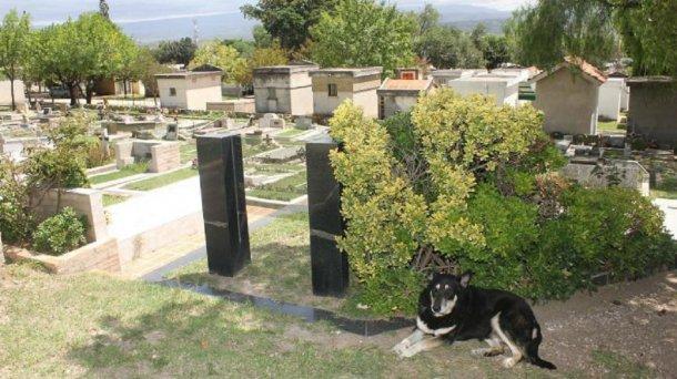 Muere 'Capitán', el perro que visitó durante 11 años la tumba de su dueño