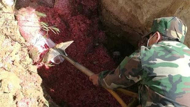 Senasag decomisa y destruye 900 kilos de carne de burro