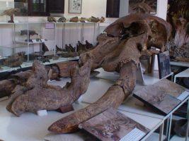 Museo Nacional de Paleontología y Arqueología de Tarija