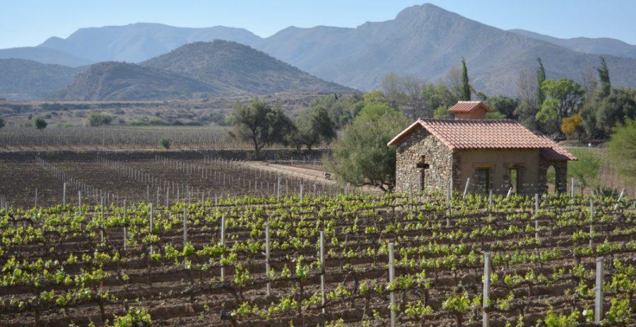 Boltur oferta paquetes turísticos a la ruta del vino de Tarija para diciembre
