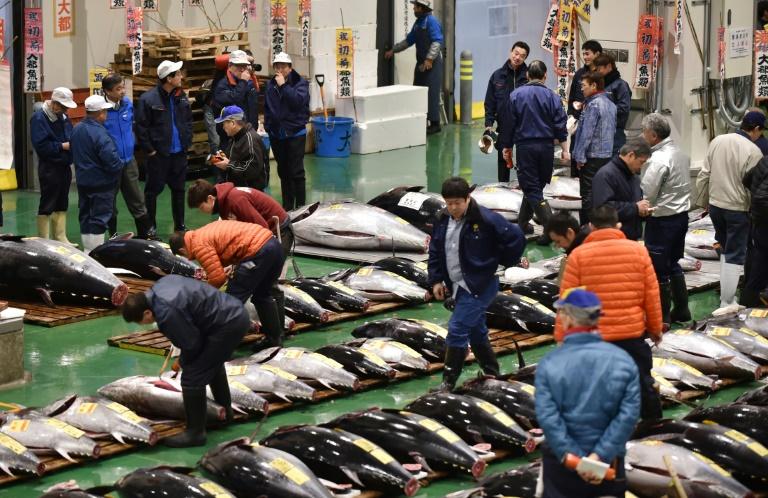 Un atún alcanza USD 3,1 millones en la primera subasta del año en Japón, un récord