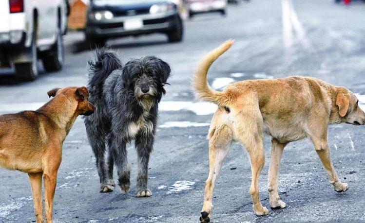 Mujer fue atacada por una jauría de perros en un barrio de Tarija
