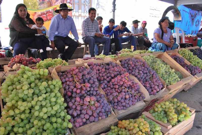 La XIV Feria Rotativa de la Uva en Calamuchita se realizará el domingo