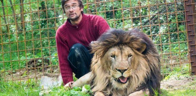 Crió a dos leones en su casa como mascotas durante años: murió devorado