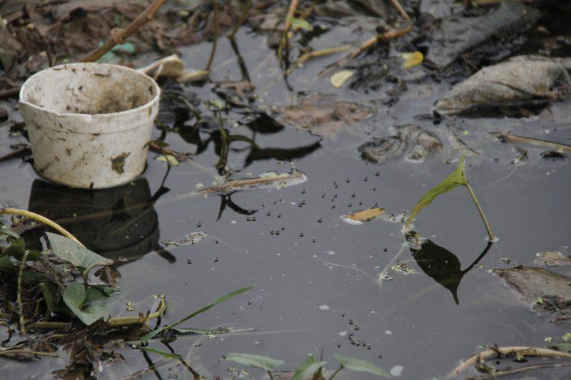 Sedes reporta cinco casos autóctonos de dengue en la ciudad de Tarija