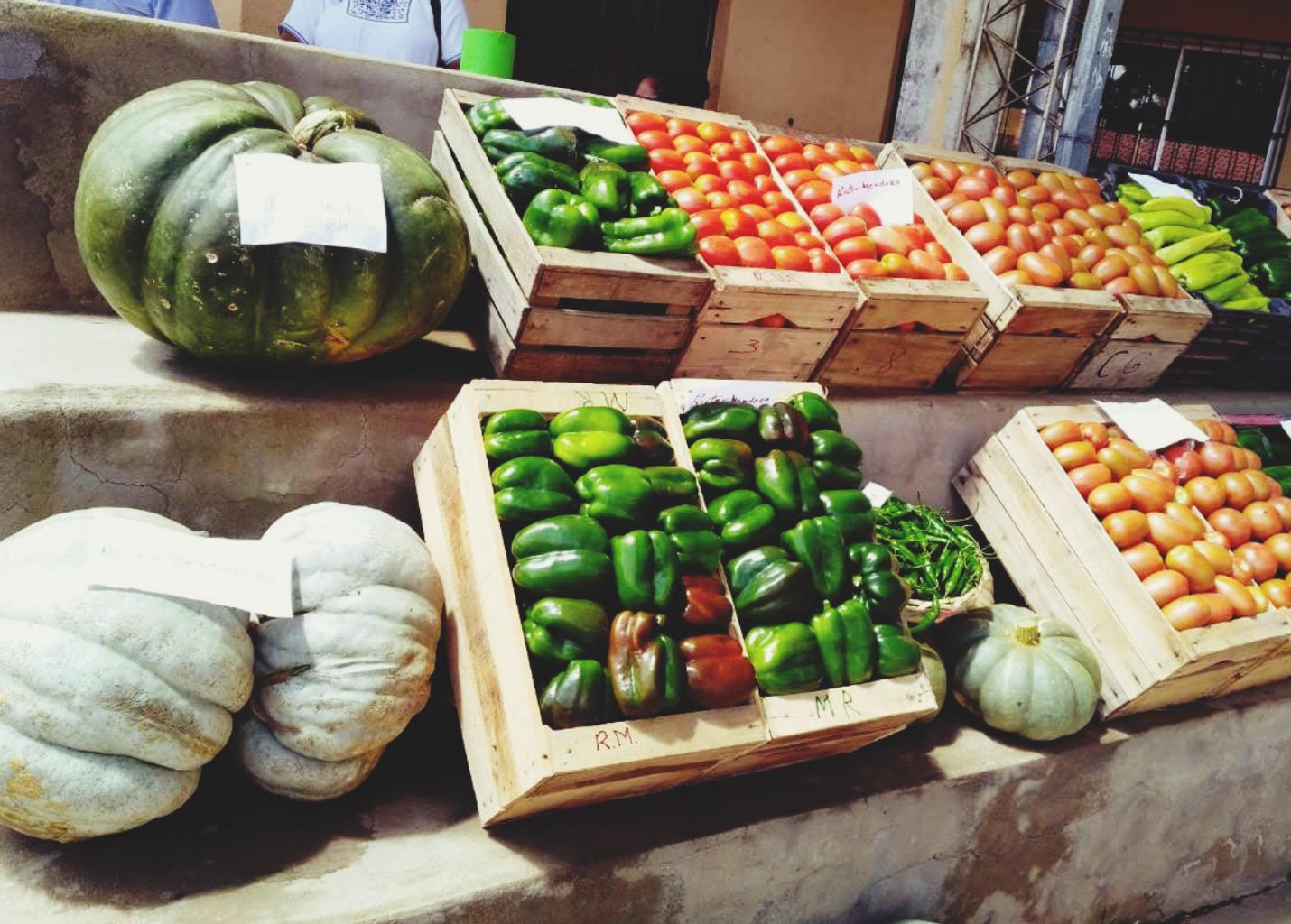 Verduras en exposición en la comunidad de Pampa Rendonda