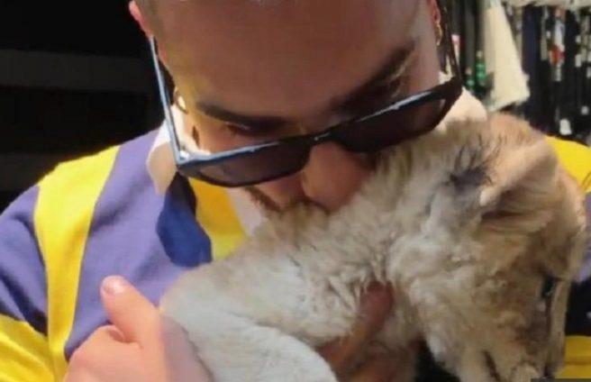 Maluma cerró su cuenta de Instagram tras ataques por su video junto a un cachorro de león