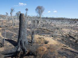 La naturaleza ya está perdida, y lo que queda continúa en declive