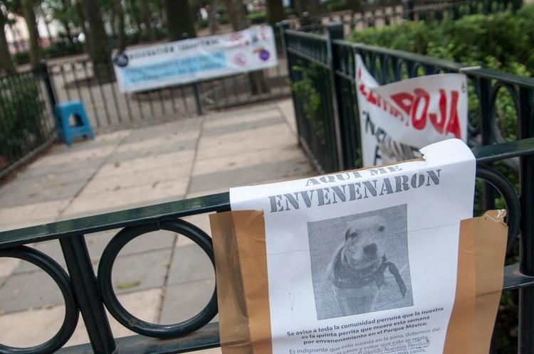 Alerta por envenenamiento masivo de perros y gatos en México