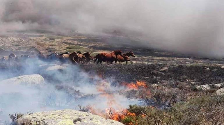 Convocan a la población de Tarija a donar insumos médicos para los animales víctimas del incendio en Santa Cruz