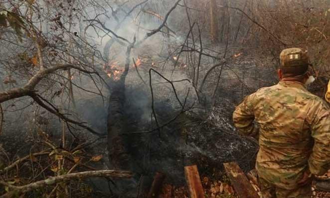 Expertos hablan de millones de animales perdidos por los incendios