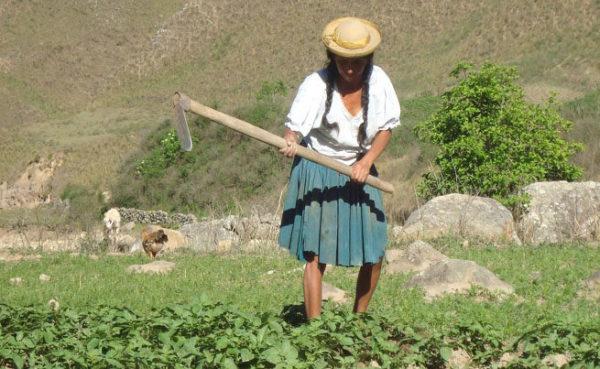 Campesinos de Tarija señalan que la cancelación del monto restante del Prosol será el siguiente año