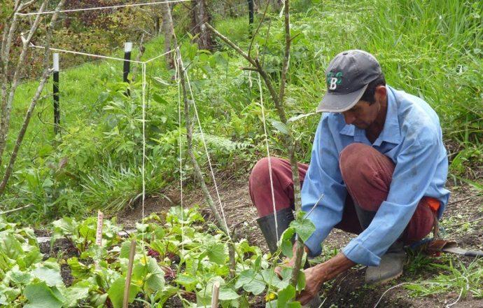 Campesinos piden valorar más a la producción agrícola y natural de Tarija