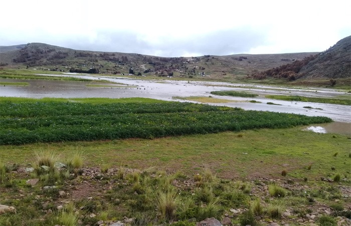 Reportan desborde de río Suches y seis comunidades afectadas en La Paz