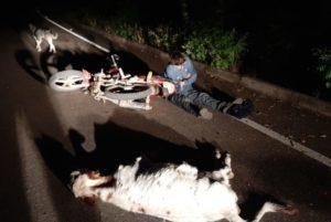 Motociclista colisiona con una vaca y queda mal herido en Caraparí
