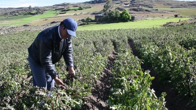 Productores de Tolomosa lamentan el ingreso de contrabando a Tarija