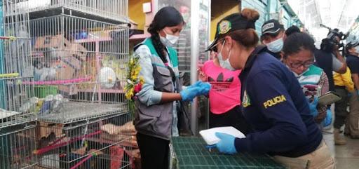 Sujeto es aprehendido por comercializar animales silvestres en redes sociales en Santa Cruz