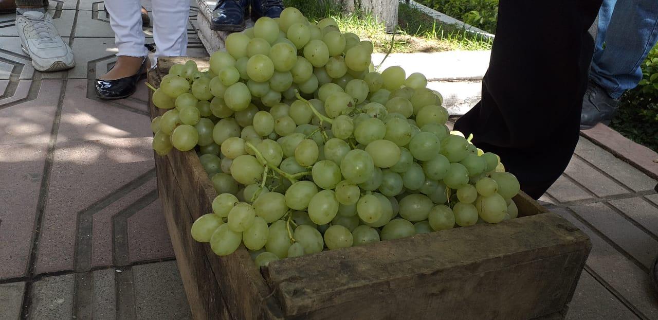 Productores piden una ley para evitar el ingreso de uva de contrabando a Tarija