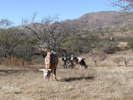 Tarija: INIAF realiza talleres de capacitación en ganadería a productores del Chaco