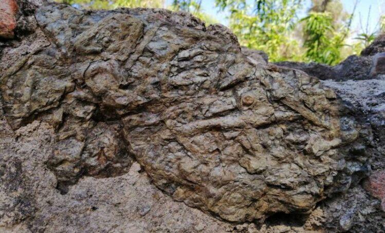 Hallan fósiles y restos de animales marinos en el antiguo palacete del expresidente Aniceto Arce